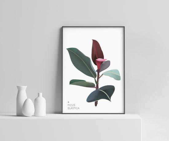 Ficus Elastica Plakat | Botanisk illustrasjon | Plante Plakat | gummiplante | botanica | digital tegning | poster Ohoi Studio
