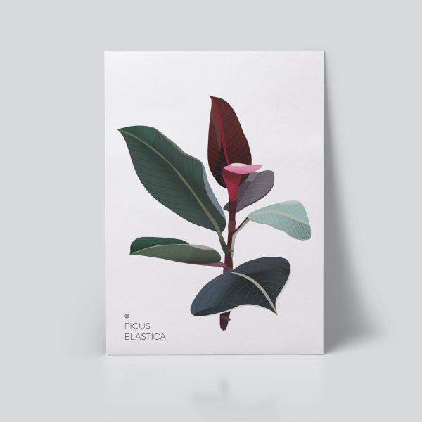 Ficus Plakat | Botanisk illustrasjon | Plante Plakat | gummiplante | botanica | digital tegning | poster Ohoi Studio