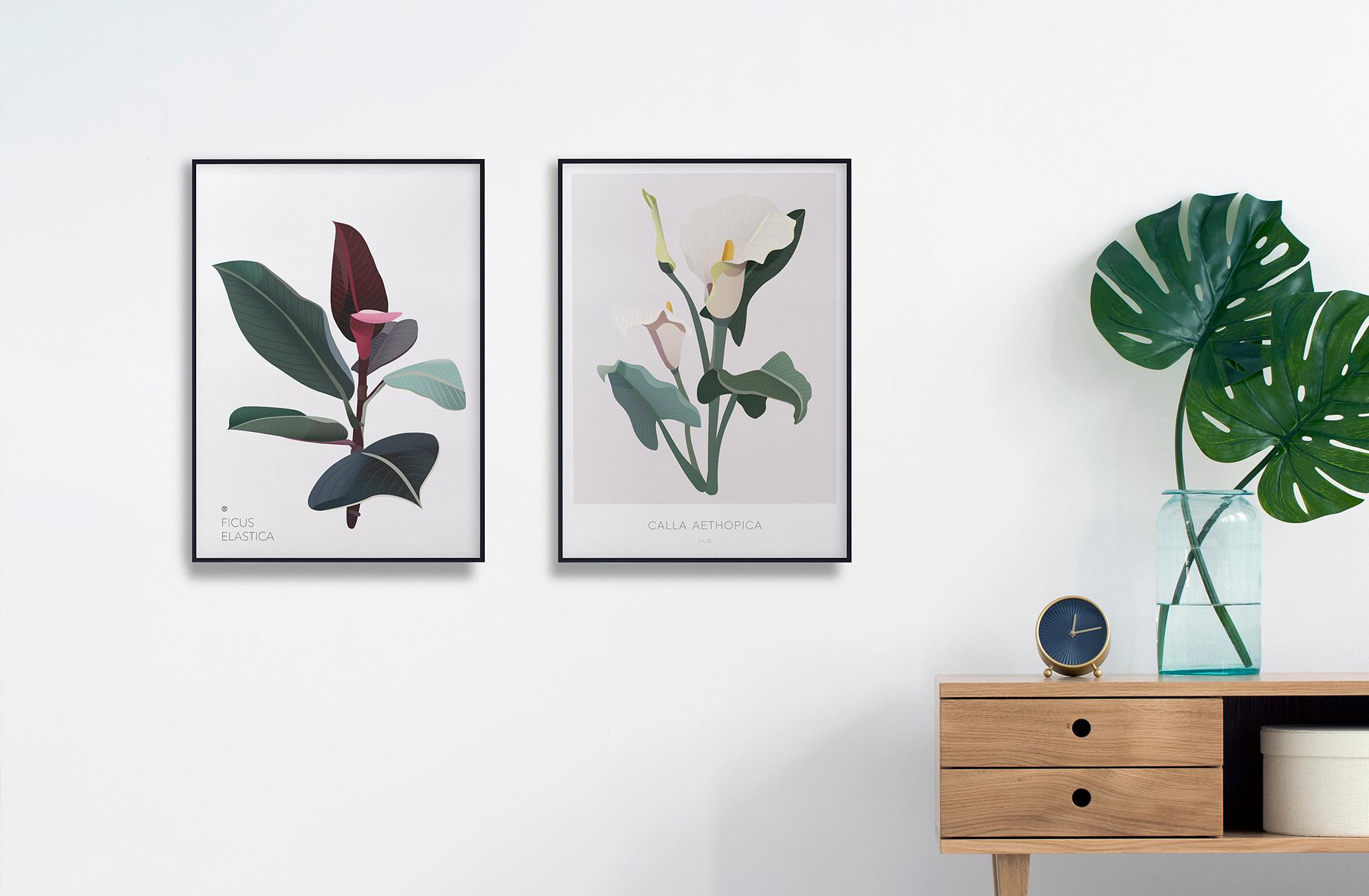 Galleri plakater   Botaniske plakater   Botanisk illustrasjon   planter   interiør   plantebord   illustrert av ohoi studio